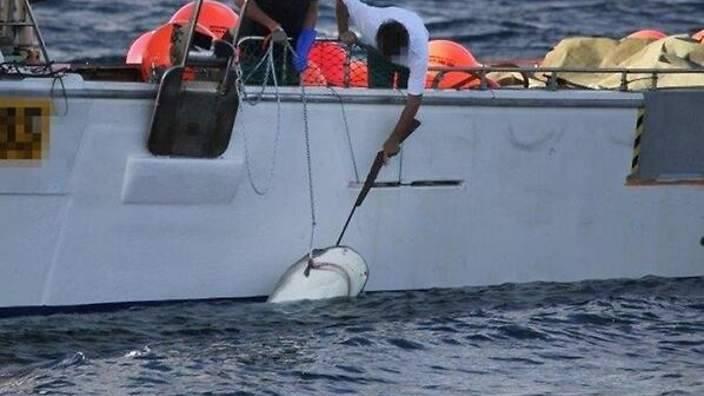 Timeline Photos - Greenpeace Australia Pacific | Facebook